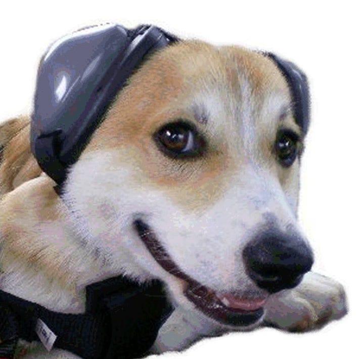 Dog Ear Sound Protection