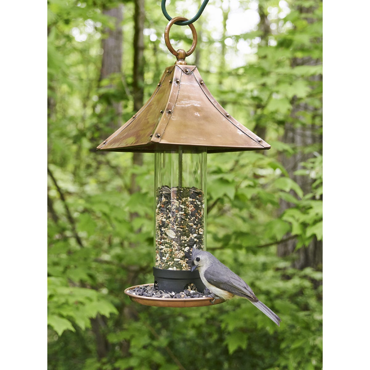 Image Result For Birdseed Lbs